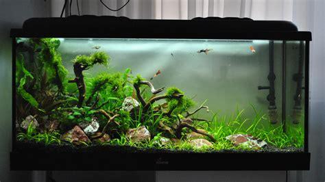 Aquascape Com 200l Ryuboku Mover2
