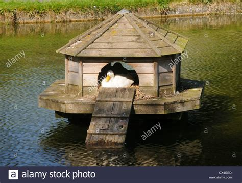 buy duck house a duck in its duck house on the duck pond in barrowden rutland stock photo royalty