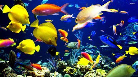 Aquarium Fish L by Tropical Fish Wonderful Color Design World Visits