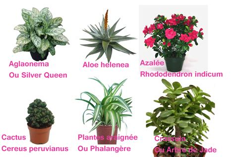 plantes d int 233 rieur d 233 polluantes des enduits en terre et