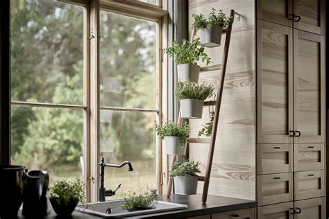 pro tips  growing herbs indoors architectural digest