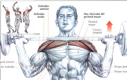 dietas  gimnasio press de hombro  barra frontal