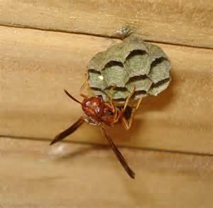 Home Team Pest Defense by Wasps Exterminator Amp Pest Control