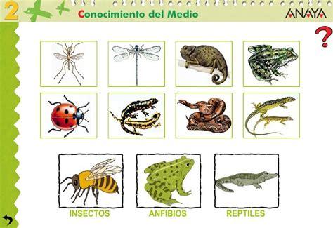 insectos anfibios y reptiles 8499281370 gominolas animal anfibio r 201 ptil ou insecto