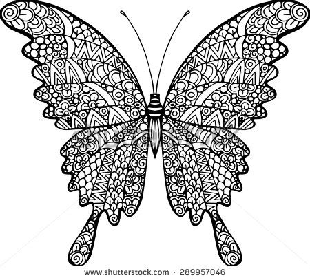 butterfly doodle coloring pages vector doodle abstract outline decorative butterfly stock