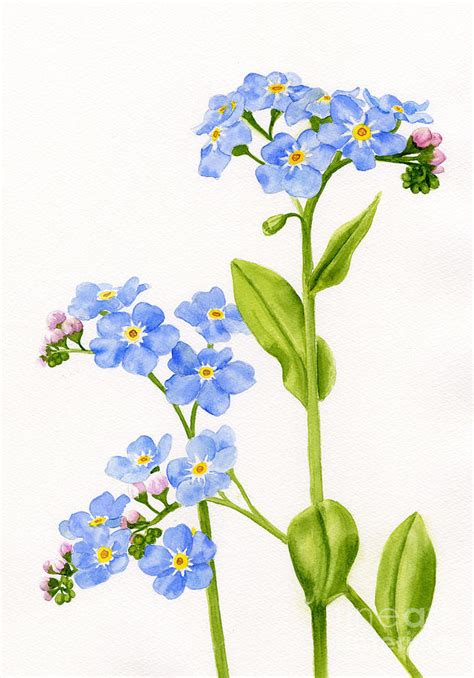 forget me nots on white painting by sharon freeman