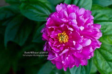 Tali Kamera Journey Floral Bunga Navy 2 fnf simple garden