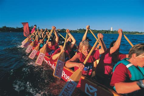 dragon boat racing tauranga living under the shadow of cancer new zealand geographic