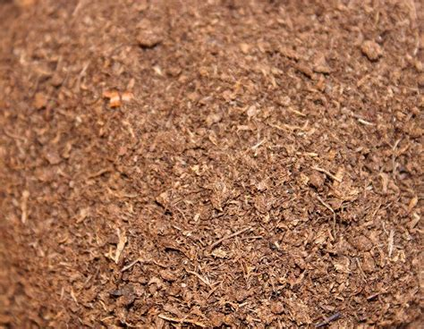 the peat atarian diet for those of us with average iqs peat moss soil amendment soil conditioner peat moss