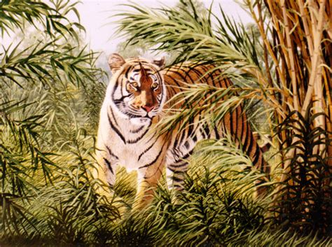 tiger in bamboo joan lehmann glover