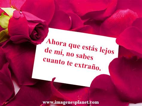 imagenes de rosas con frases 17 best images about frases on pinterest night te amo