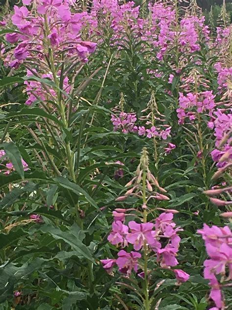 botanic garden durham the botanical gardens in durham durham magazine durham