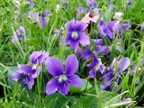 Windowsill Paint Flower References On Pinterest Dogwood Trees Violets