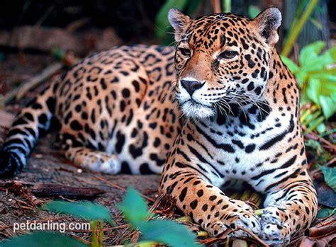 imagenes de animales y plantas de la selva im 193 genes de animales de la selva