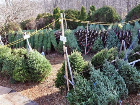 advanced disposal offering free christmas tree pick up in