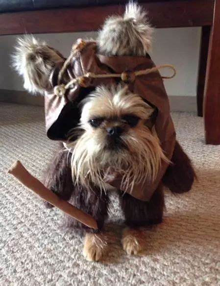 ewok puppy 25 best ideas about ewok costume on names for teddy bears shih tzu