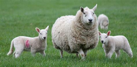 imagenes varias de animales im 225 genes de animales dom 233 sticos