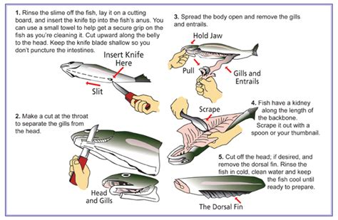 how to clean odfw how to clean and keep your catch