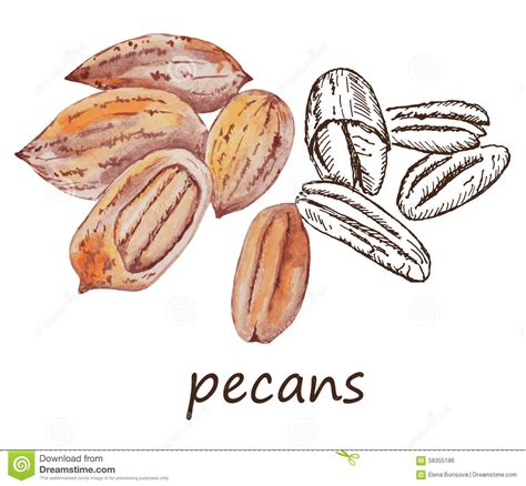 how to make doodle nuts nut pecans stock vector image of illustration graphic