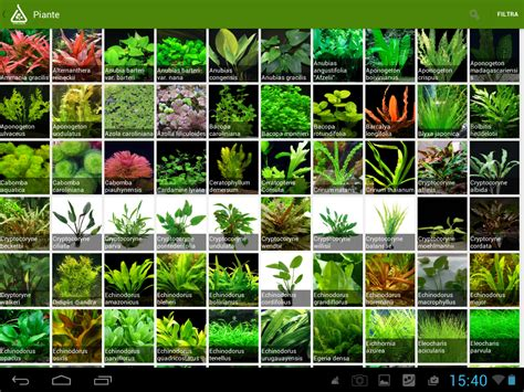 Home Decorating Style Names by Types Of Aquarium Plants Live Aquarium Plants For