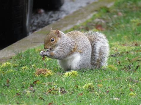 what to feed squirrels in backyard 9 important reasons you should start loving squirrels
