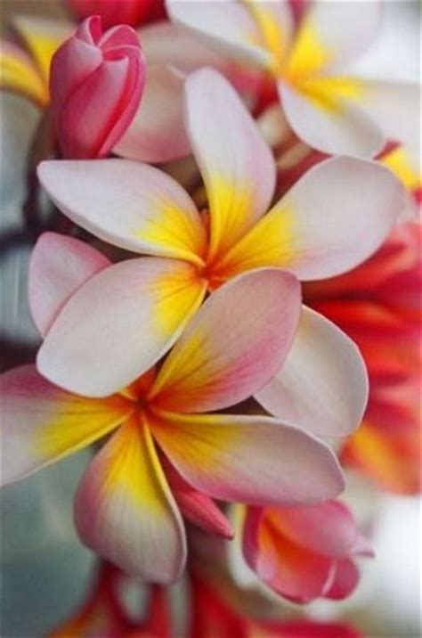 hawaii colors fragrance hawaii and colors on