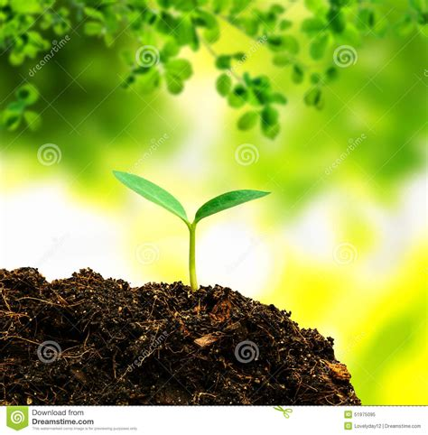 small tree small tree new stock image image of agricultural