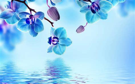 flower wallpaper blue orchid flower wallpaper