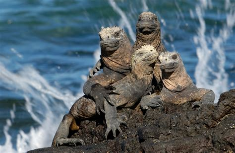 7 Amazing Animals From The Galapagos Islands by The Top 7 Most Interesting Species Found Only In The Galapagos