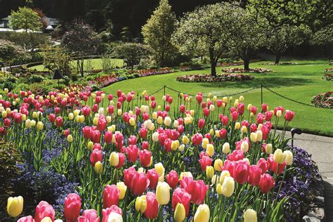 Gardens Canada by Butchart Gardens Columbia Pink Travels