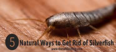 5 ways to get rid of silverfish the soft landing