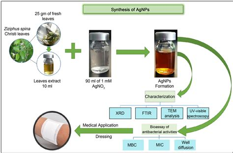 biosynthesis of nickel nanoparticles using leaf extract of rapid biosynthesis method and characterization of silver