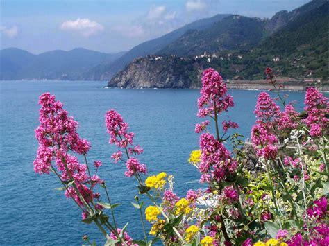 i fiori mare fiori delle cinque terre foto immagini paesaggi mare
