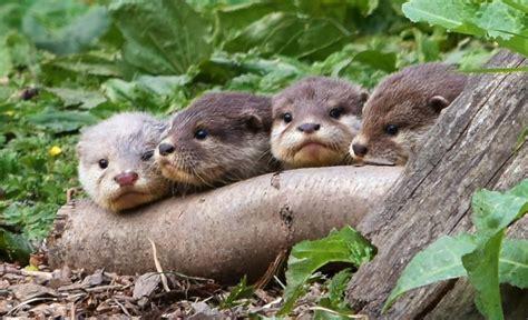 cheeky names  otter babies newcastlegateshead initiative