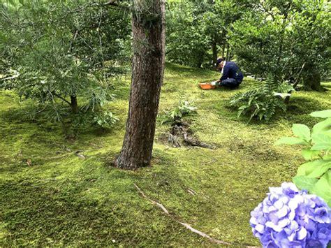 giardini giapponesi giardini giapponesi quel che nelle foto di solito non