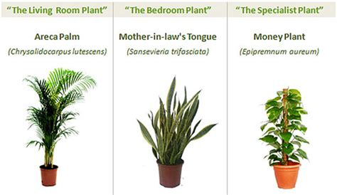 Desk Plants That Clean The Air by Cleanest Greenest Desk Uses Three Indoor Plants To Grow