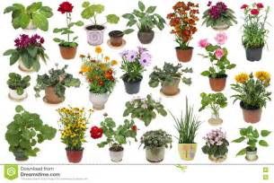 Flowers Poisonous To Cats - houseplants and indoor flowers set stock photo image