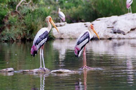 my travel memoirs ranganthittu bird sanctuary mysore
