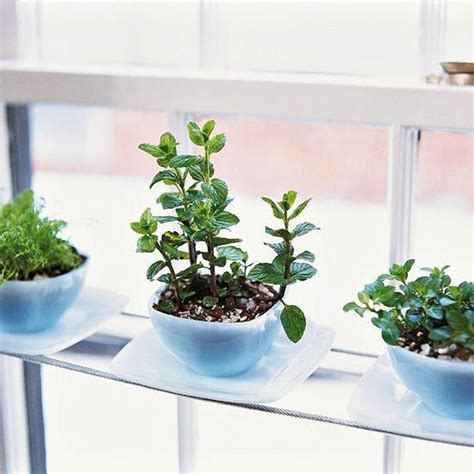 herbs indoors diy indoor herb garden ideas