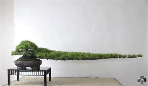 top 10 pictures of trees for day top 10 most popular quot bonsai of the day quot bonsai empire