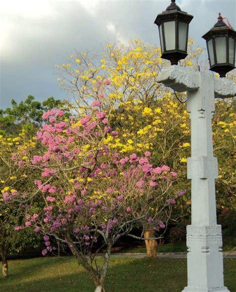 Of Peradeniya Mba 2017 by Sri Lanka Cus School Education News ශ ර