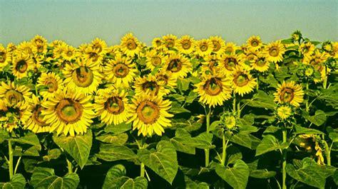 compo di fiori fiori di co ci di fiori