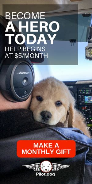 pilot dogs pilot www pixshark images galleries with a bite