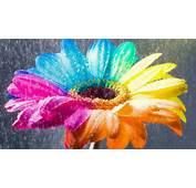 Flower Wallpapers Colorful Rain  HD Desktop
