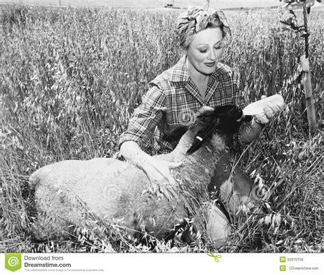 alimentazione pecore pecore d alimentazione della donna con la bottiglia tutte