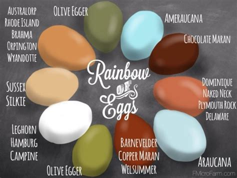 a rainbow of egg colors chicken egg color chart breed specific tbn ranch