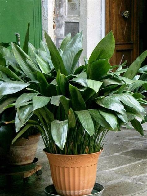 plants that do not need much sunlight what indoor plants need little light interior design