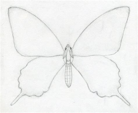 How To Draw Butterfly How To Draw A Butterfly Jus 4 Kidz
