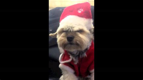 sad puppy commercial sad commercial