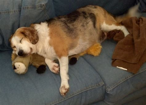 lounging on the couch top 5 cutest animals with stuffed animals hop to pop